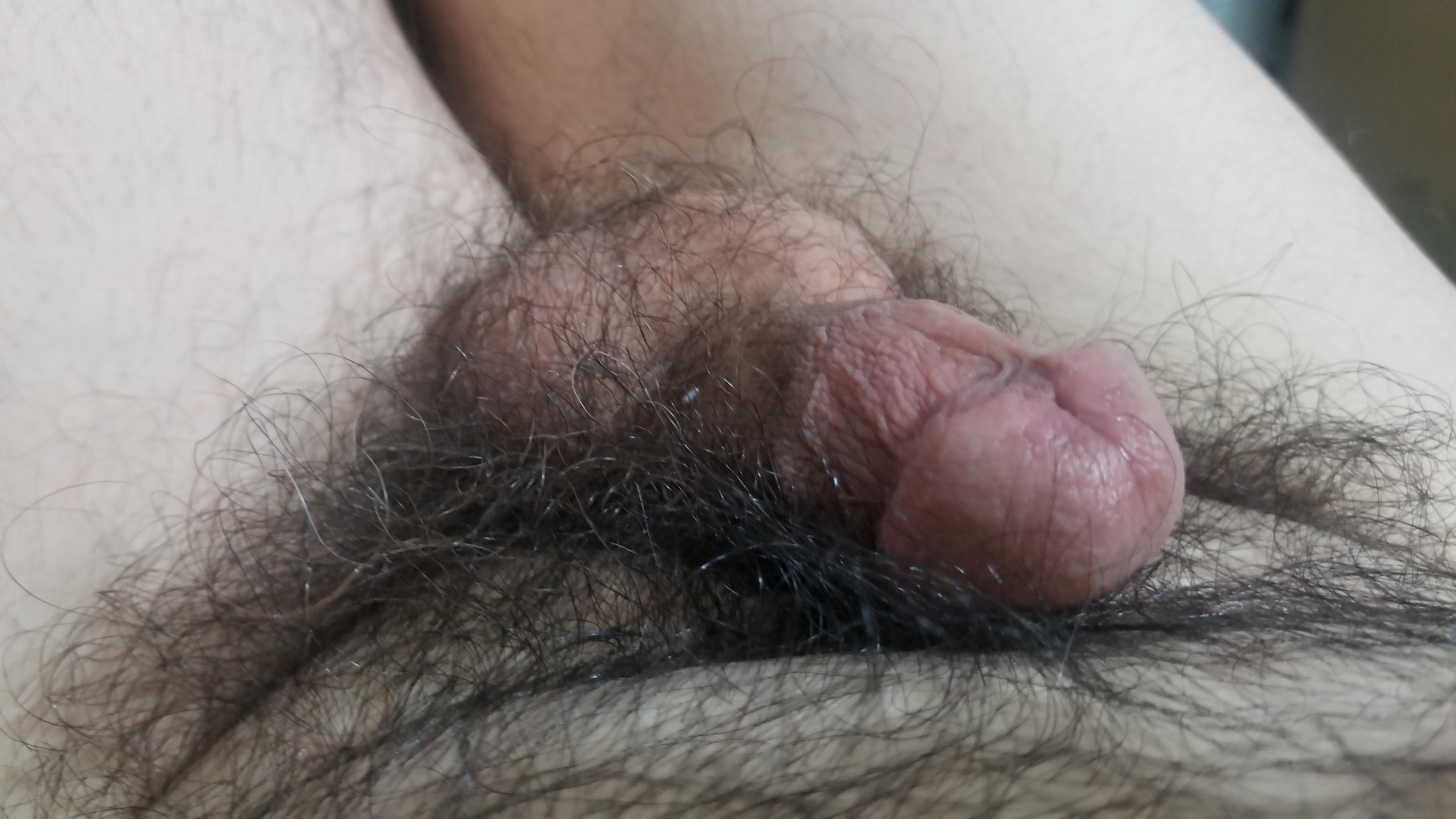 Small hairy dick